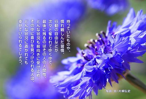 片柳神父 こころの道しるべ11「最後に残るもの」.jpg